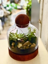 Wood ball & base Terrarium